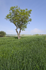 Close up to the bio agriculture in the fields