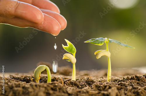 Male hand watering young plant