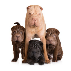 three shar pei puppies with mother