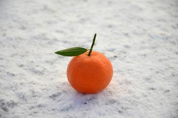 Tangerine on snow