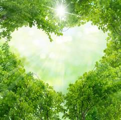 Green leaves in heart shape