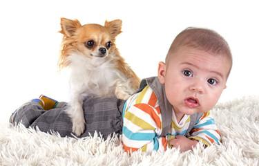 baby and chihuahua