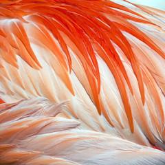 Pierze ptak