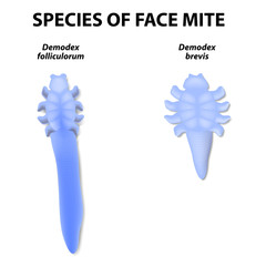 species of face mite.
