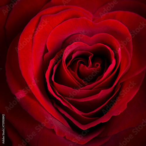 canvas print picture herzförmige Rose