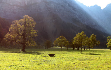 Bergahorn im Großen Ahornboden im Karwendel