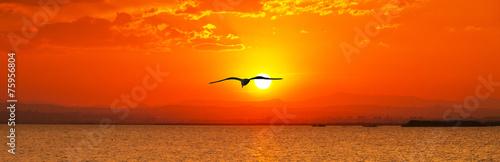 In de dag Oranje eclat en busca del sol naciente