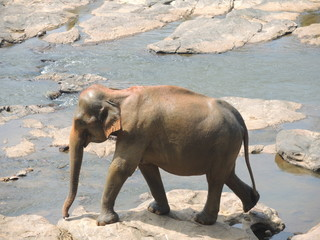 Elephant on the river