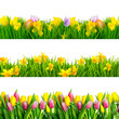 Freisteller Osterwiesen Blumen Tulpen Narzissen