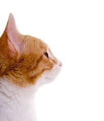 Katzenkopf im Profil