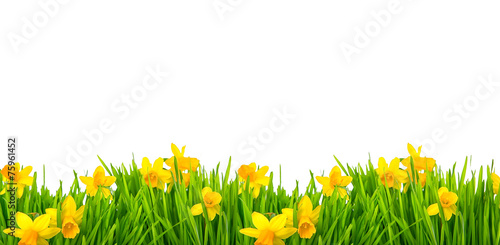 Foto op Aluminium Narcis Frohe ostern Narzissen