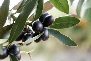 schwarze, reife Oliven