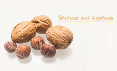 Walnuts and hazelnuts isolated on white