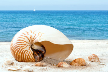 Nautilus am Strand