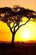 Leinwanddruck Bild - African sunset