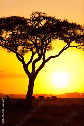 Leinwanddruck Bild African sunset