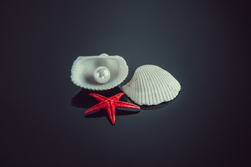 pearl on the seashell.  seashell with pearl on black background