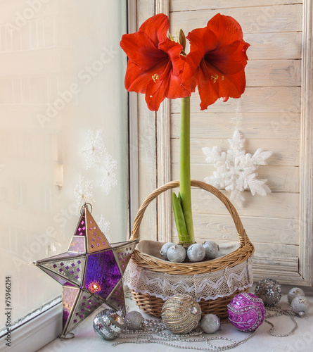 Red Hippeastrum with Christmas decoration - 75966214