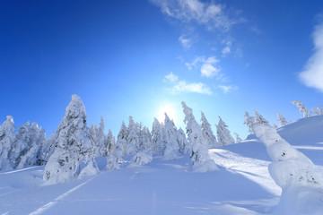 樹氷林を照らす太陽