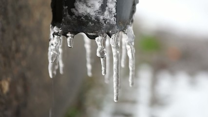 close up of dripping icicles