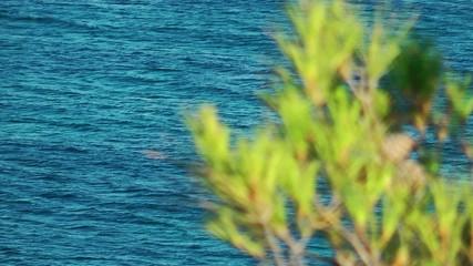 Pine Cone Tree and Sea