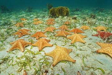 Cluster of starfish underwater on ocean floor