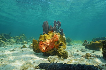 Colorful life under sea with sponges and corals