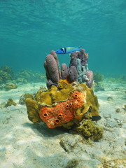 Colorful life underwater with sea sponge and coral
