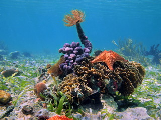 Colorful tropical sea life underwater in Caribbean