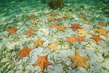 Group of starfish underwater on the seabed