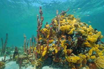Multi colored sea sponges underwater in coral reef