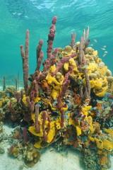 Multicolored sea sponges underwater in coral reef
