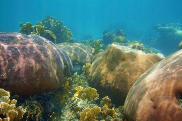 Underwater landscape in a stony coral reef