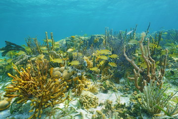 Underwater landscape on a thriving coral reef