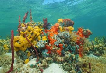 Vibrant multi-colored sea sponges under the water