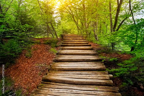gleboka-lasowa-droga-w-swietle-slonecznym-jeziora-plitwickie