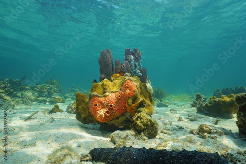 Leinwanddruck Bild Colorful life under sea with sponges and corals