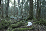 There is a skull in the forest