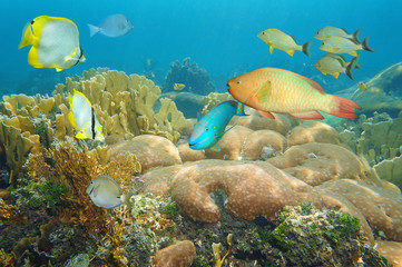 Coral reef with colorful fish under the sea