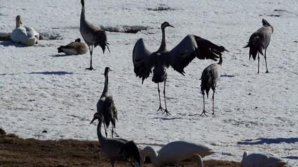 Wasservögel im Frühling