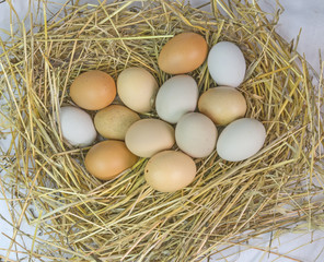 hen nest and eggs white and red