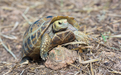 Turtle in nature,Thailand