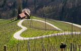 Road in a shape of a heart, Maribor, Slovenia - 75981463