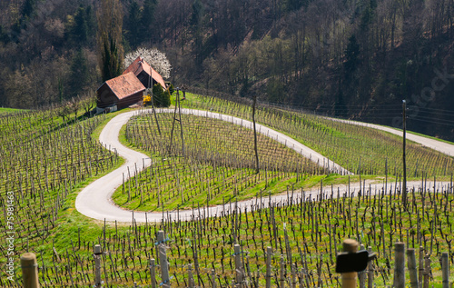 Leinwanddruck Bild Road in a shape of a heart, Maribor, Slovenia