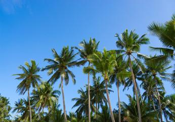 Palm and sky
