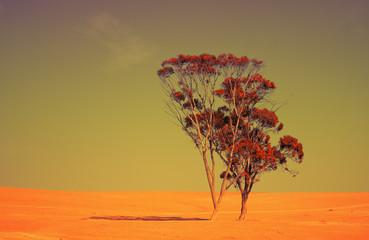Alone tree in Judean Desert at sunset
