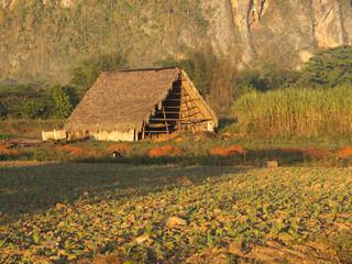 Grange au milieu d'un champ cultivé à Cuba.