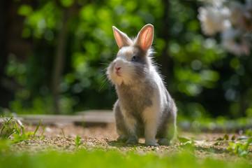 Cute Rabbit Outdoors