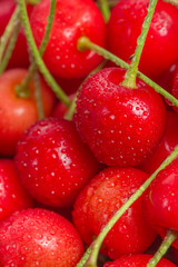 Red Cherries with Water Drops Close-Up