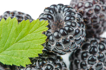 Blackberries with Green Leaf Close-Up